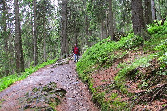 Wygodna ścieżka przed Pierwsze rozstajem Nad vodopády Bílé Opavy.