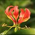 تعرّف على 10 من أغرب أنواع الزهور على الإطلاق