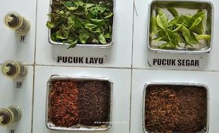 proses pengeringan teh tambi