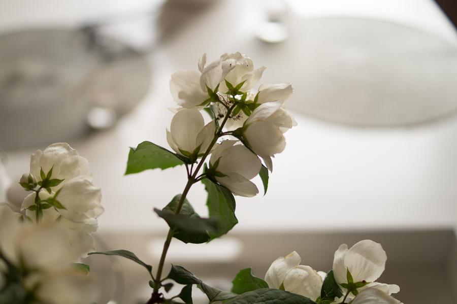 Blog + Fotografie by it's me | fim.works | weiße Blüten vom Duftjasmin