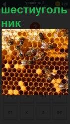 соты для пчел шестиугольные 800 слов на 5 уровне