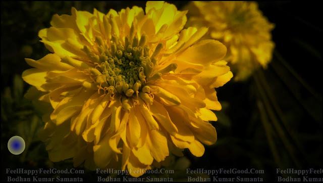 FeelHappyFeelGood Photography~13 ~