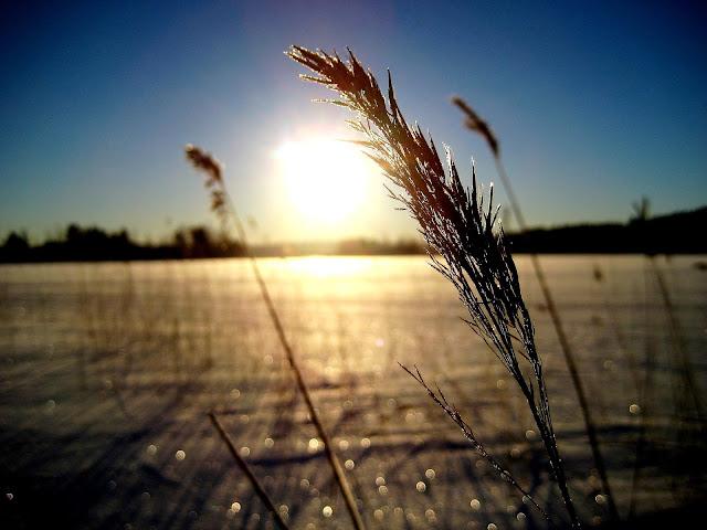 heinä, aurinko