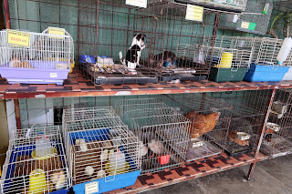 Animals for sale in pet store in Puriscal.