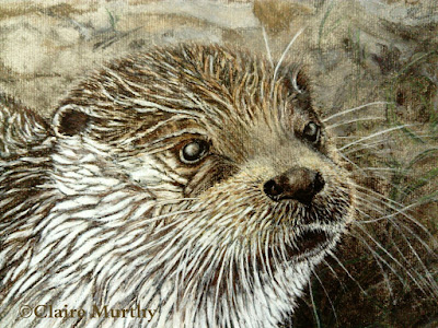 demonstration draw an otter