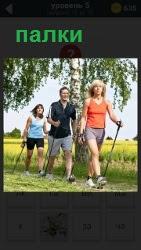 Несколько человек идут по тропинке с палками, осваивая скандинавскую ходьбу в прекрасный солнечный день