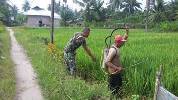 Serda Toni Suwandi Dampingi Petani Lakukan Penyemprotan Hama Padi di Desa Sei Silau