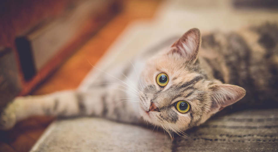 Signs Your Cat Might Be Stressed