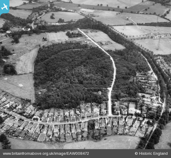 Photograph of George's Wood, Brookmans Park, 1947