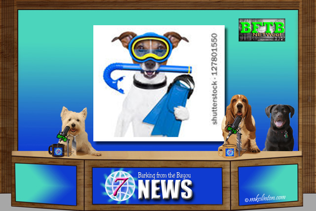 BFTB NETWoof News with scuba dog