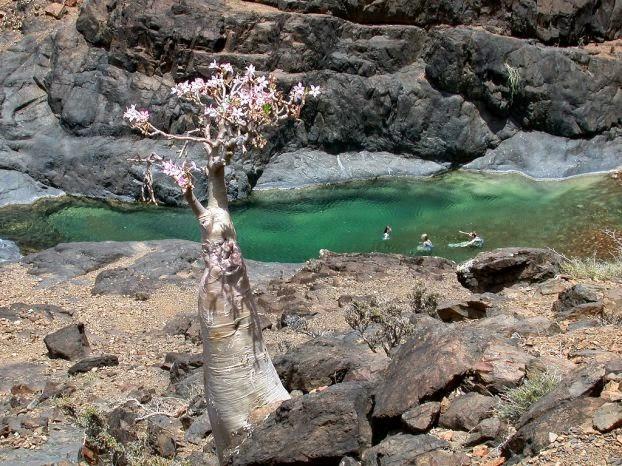 Socotra (Socotorá) | A Ilha com Biodiversidade Única