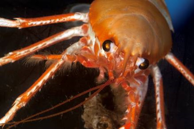 Shocking gaps in basic knowledge of deep sea life