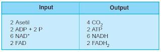 tabel hasil daur krebs