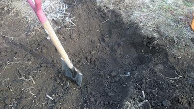 掘り上げ後