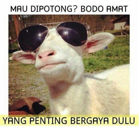 berinteraksi dengan siapapun dan dimanapun melalui internet Kumpulan Meme Qurban Lucu Instagram