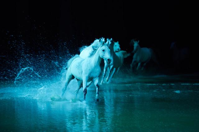 Cavalia's Odysseo - La Grande Aventure - Andrew Miller - #OdysseoSAUGA