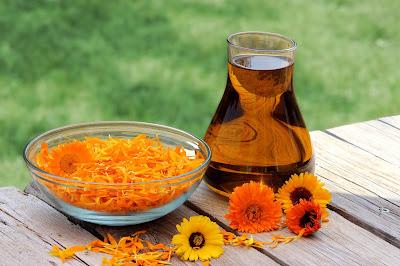 manfaat-bunga-calendula-untuk-kesehatan-dan-kecantikan-jpg