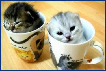 Lustigste Katzen der Welt