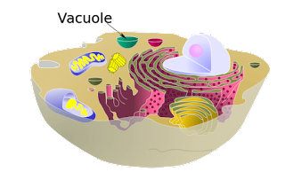 Struktur Kimiawi Sel Secara Umum