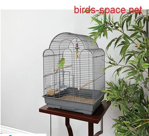 لحظة وصول الطائر قم بوضعه في قفص نظيف و منفرد ، و أحرص على تقديم أكل جديد و نظيف .
