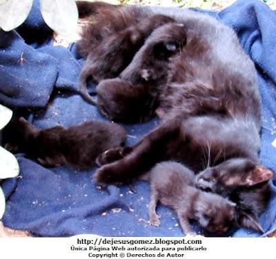 Foto de gatos negros pequeños por Jesus Gómez