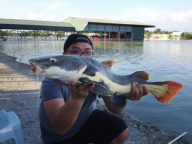 Trik Mancing Ikan Patin Siang Hari Di Kolam