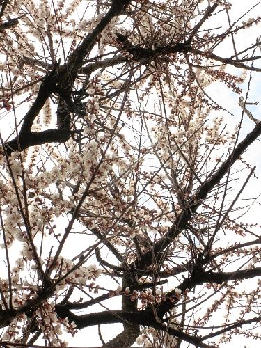 Diderot S Photo Blog Mystery Tree No Longer Mysterious