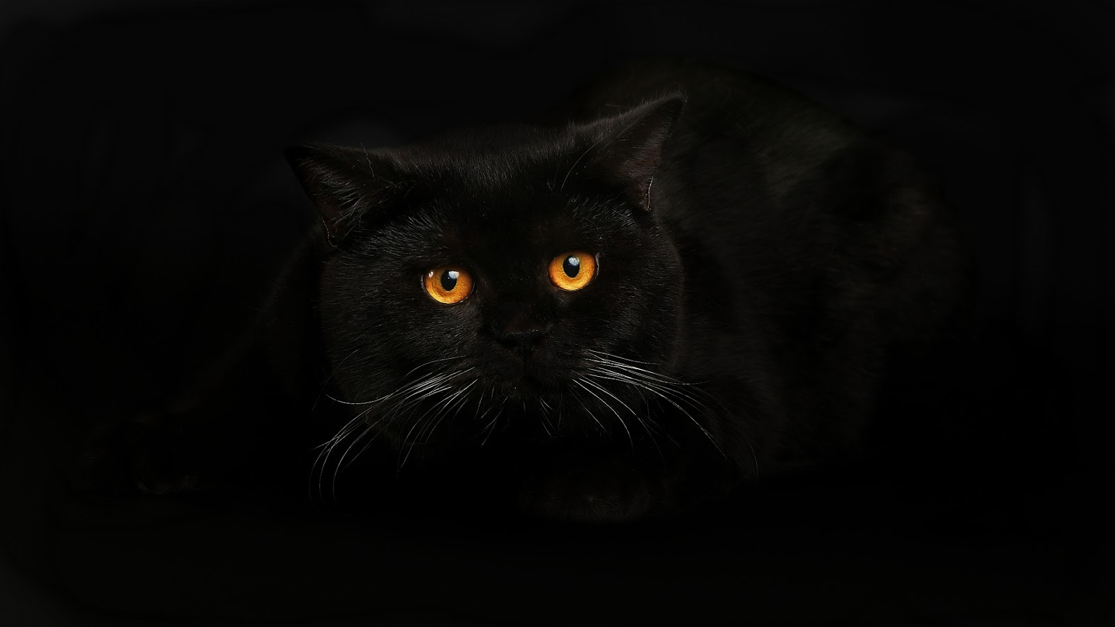 Black Cat Wallpaper - Best HD Wallpapers