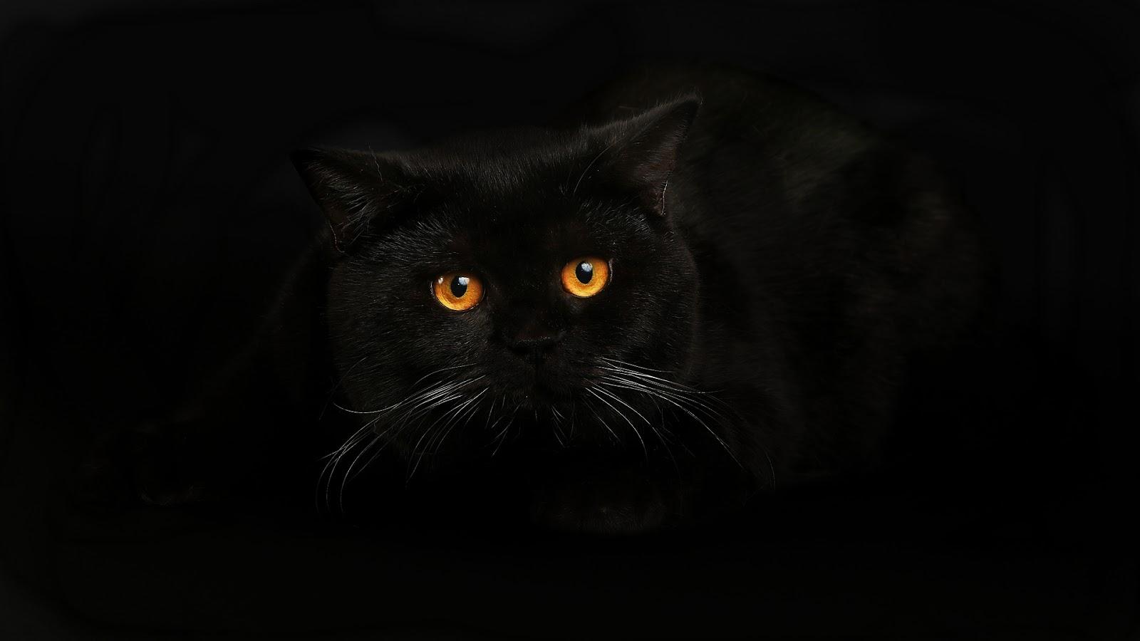 Black Cat Wallpaper - Best HD Wallpapers