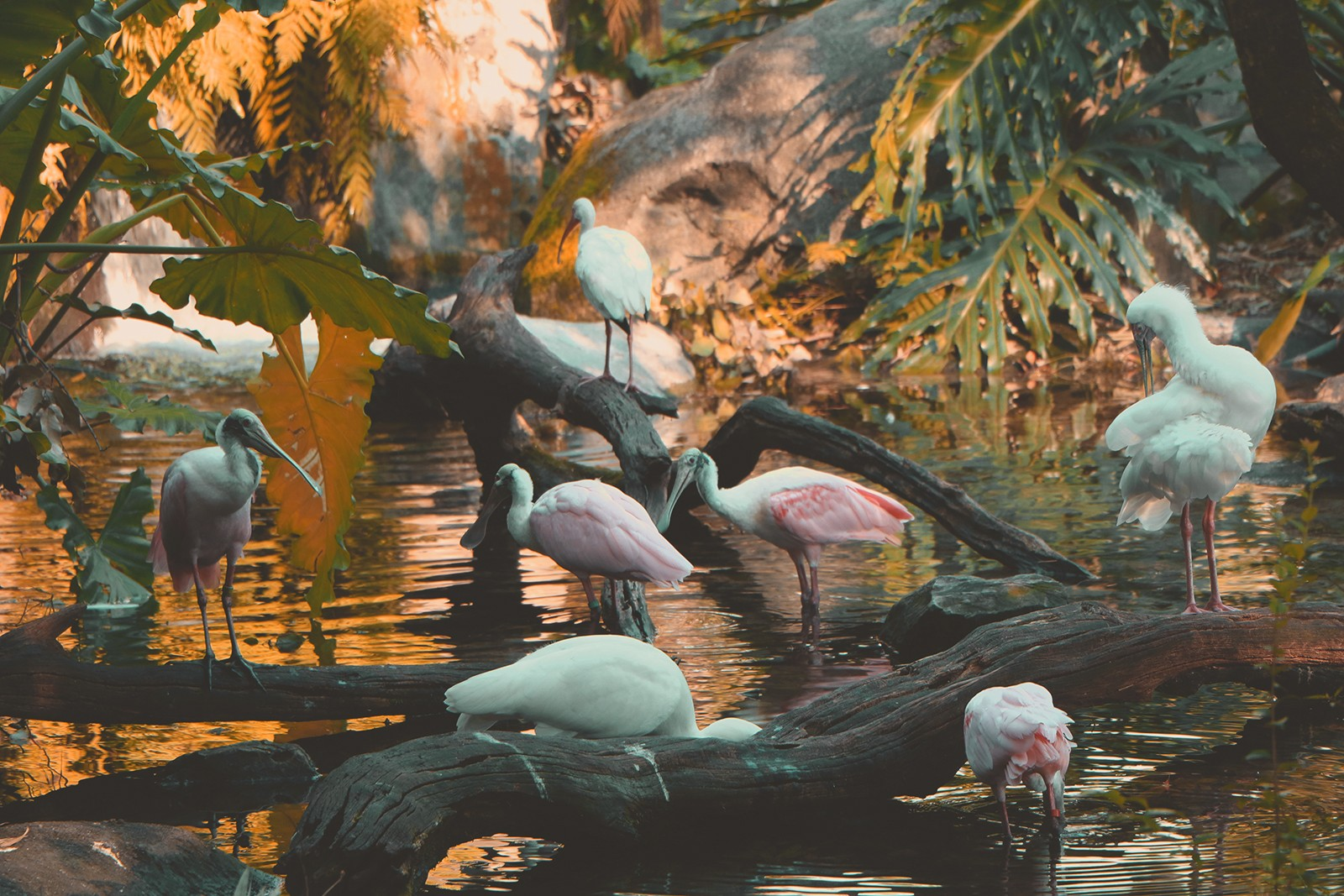 vários flamingos no lago