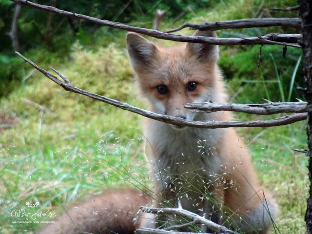 Cute Fox Photo
