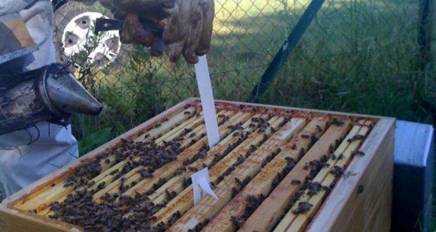 """""""تربية النحل"""" بجهة كلميم واد نون .. قطاع واعد 116 تعاونية فلاحية لتربية النحل تتمركز بجهة كلميم واد نون"""