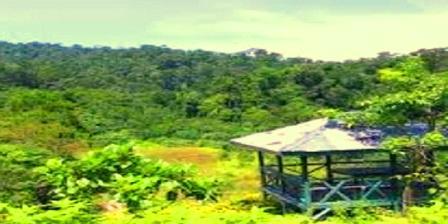 Taman Nasional Bukit Tiga Puluh di Indragiri Hulu Riau