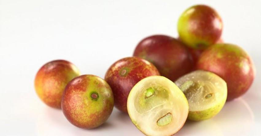 CAMU-CAMU: Fruta exótica del Amazonas podría convertirse en una efectiva arma contra la obesidad, según prestigiosa revista médica Gut