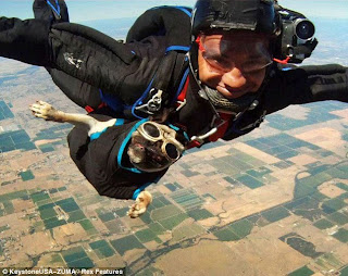 Otis the Skydiving Pug