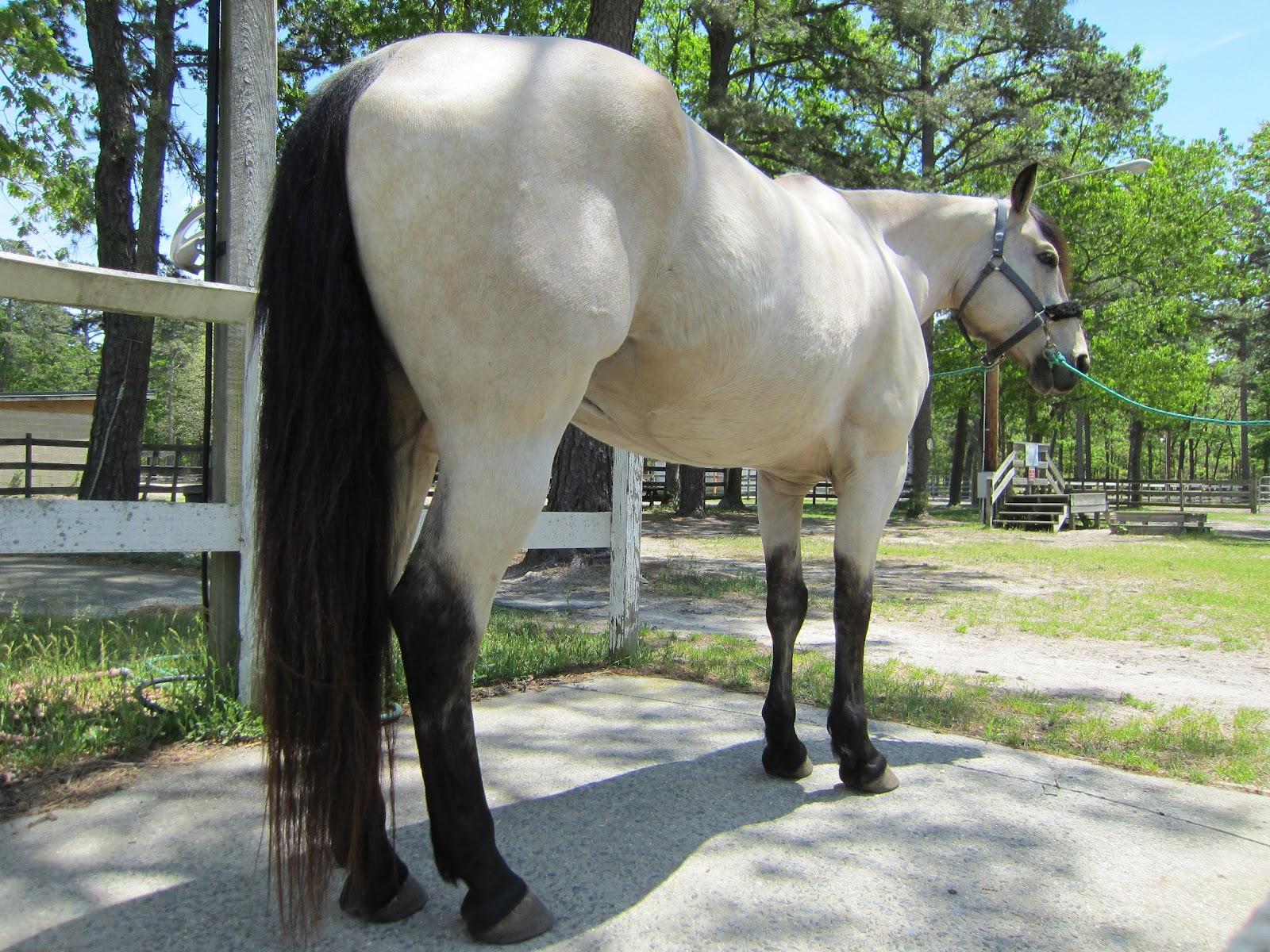 Buckskin Sofa Poundex Bobkona 3 Piece Bonded Leather Sectional Cream Memoirs Of A Horse Girl: Buttermilk Buckskin: Changing Colors