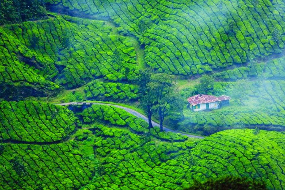 munnar honeymoon, munnar tour packages, munnar tree house packages, kerala tour packages for family, kerala tour packages with price