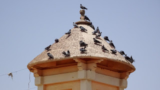 Birds sitting and shitting on the roof in Asmara