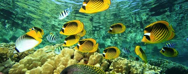 Arrecife Barracuda, Cozumel