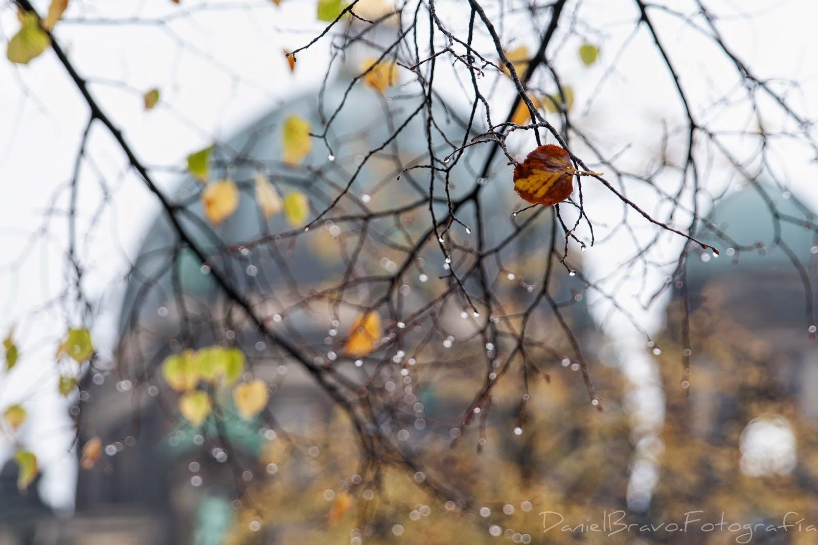 otoño, Berlín, catedral protestante, hoja, agua, gotas de lluvia, lluvia, Berlin