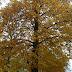 Jesiennie... ;)