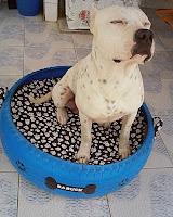 Cuchas para refugios de animales hechas con neumáticos reciclados