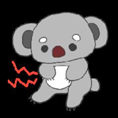 eyeblow koala
