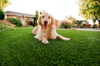 affordable and durable and it is easy to install over soil or concrete and virtually dogs artificial grass maintenance