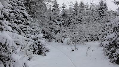 Verschneiter Weg bei Hummleren