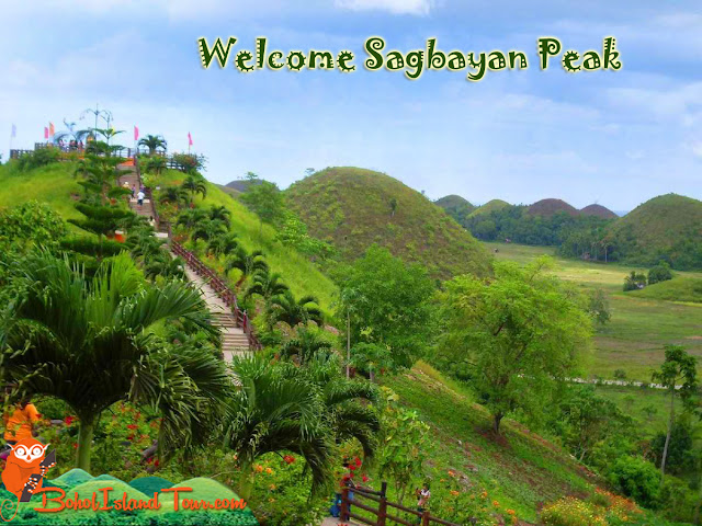 Wow Bohol Travel And Tours