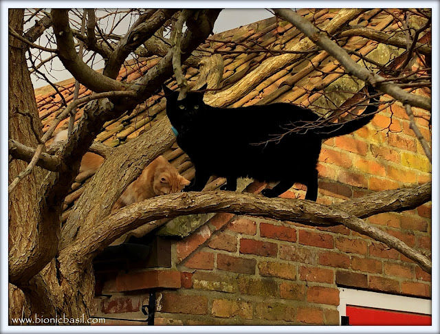Parsley the house panther and Fudge the ginger ninja are up the tree again