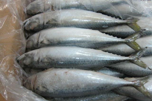 Harga Ikan Kembung RM12 Sekilo di Perlis