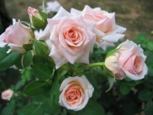 rose urgent care