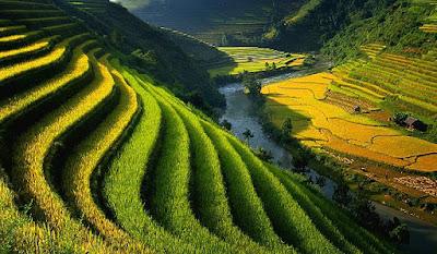 Tanah Sebagai Lahan Potensial Dan Manajemennya